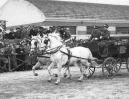 fiera-cavalli-verona-10855.660x368