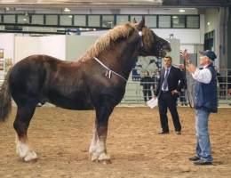fiera-cavalli-verona